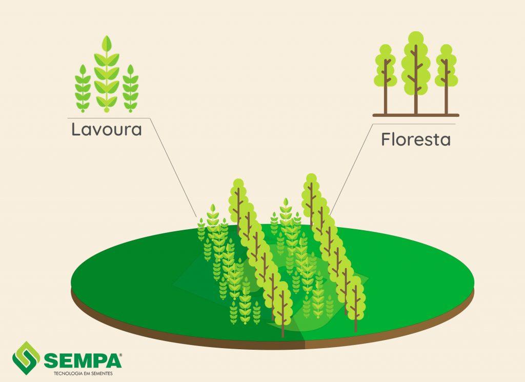esquema de integração de lavoura com floresta