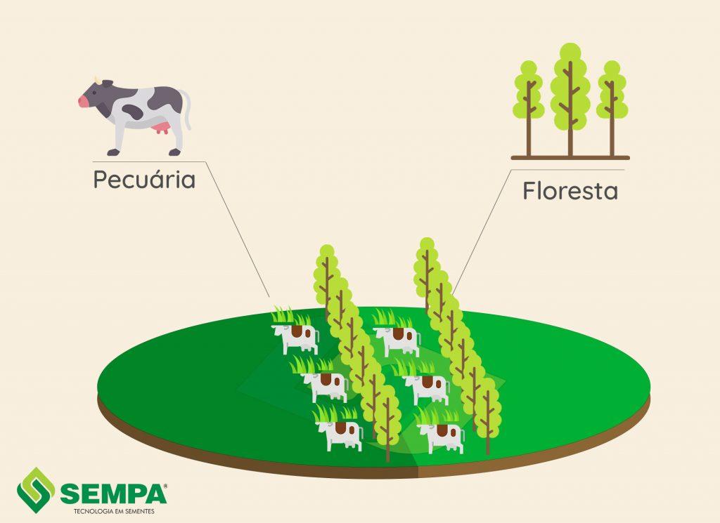 esquema de integração de floresta com pecuária