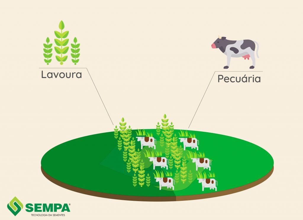 esquema de integração de lavoura com pecuária